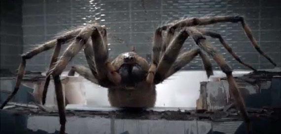 arachnids-in-the-uk-spider