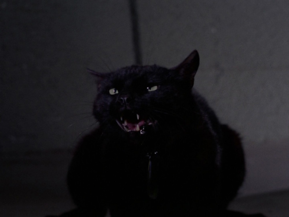 catspawhd0320